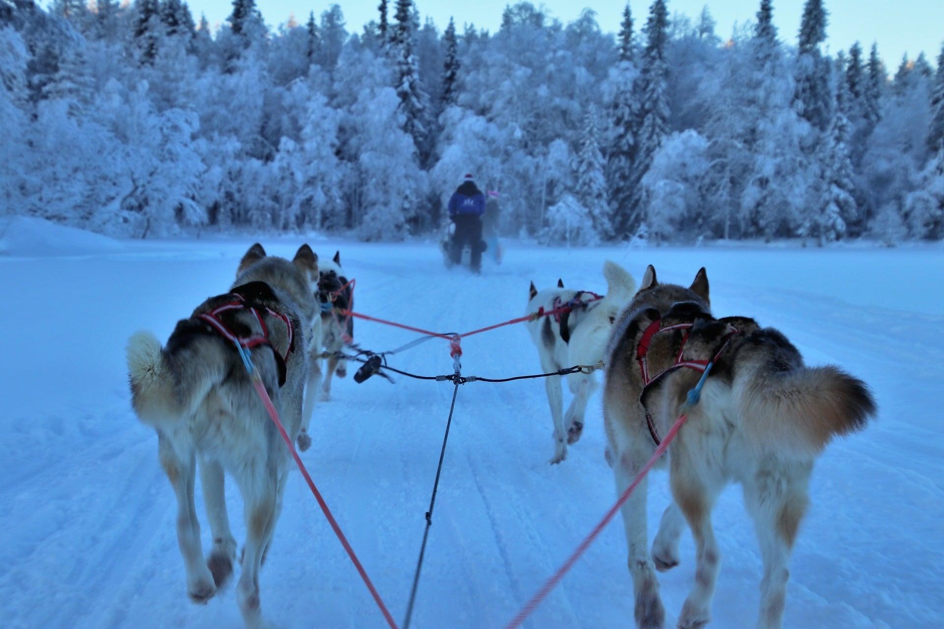 Les différentes activités à faire en Laponie